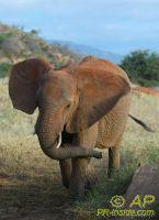 Wild elephants on increase in Kenya due successful protection measures