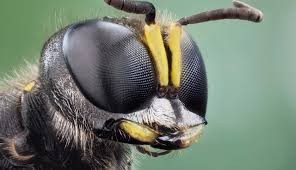 Light Therapy May Help Reduce Global Bee Decline. Credit: USGS Bee Inventory and Monitoring Lab