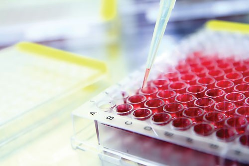 cell based assays market by product report Assay market is growing due to drug related research, rise in demand for biological drugs, demand of toxicity screening in drugs, need to reduce cost associated with a drug discovery.